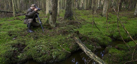 Gammelskogen i Brunlanes